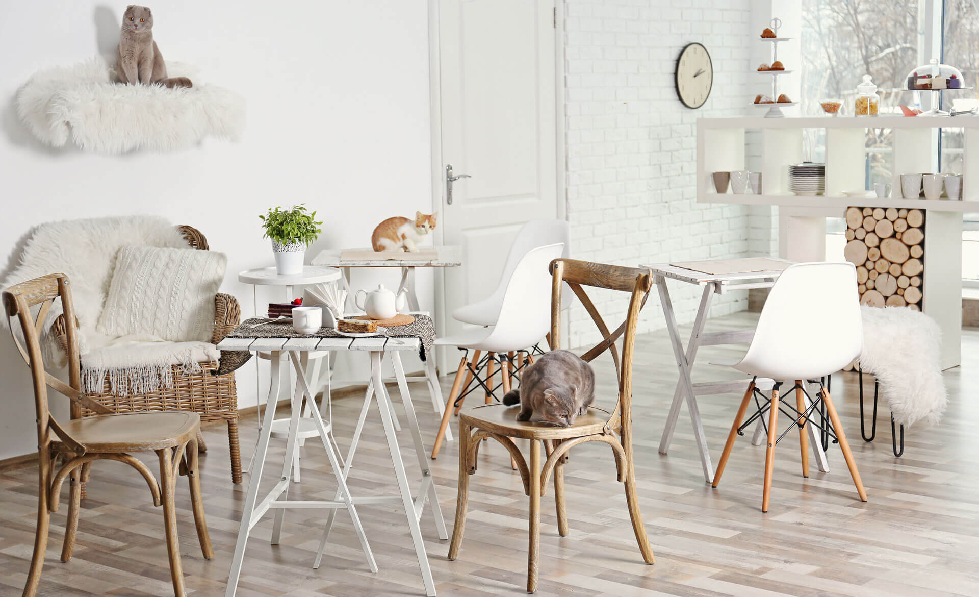 Cat Cafe - Pets Style